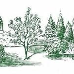 zazimovanie magnolie
