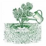 zalievanie rastlin