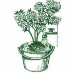 namacanie rastlin
