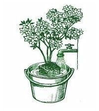 Namáčanie rastlín