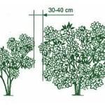 vysadba okrasnych rastlin