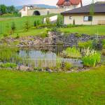 zahradne jazierko s vodnymi rastlinami