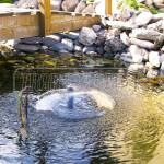 fontanka v jazierku