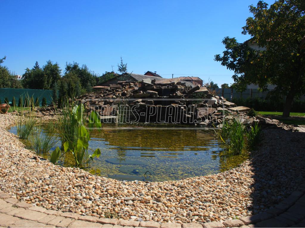Starostlivosť o jazierko v lete