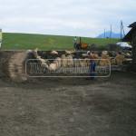 priprava pody pod vysievany travnik