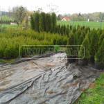 skolka okrasnych drevin