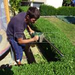 strihanie zivych plotov