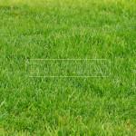 travnikovy koberec