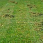 travnikova madcina po vertikutacii