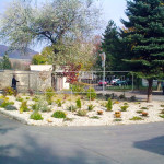 vysadba strkoveho zahonu