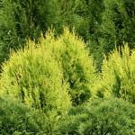 Návrhy a realizácie okrasných záhrad